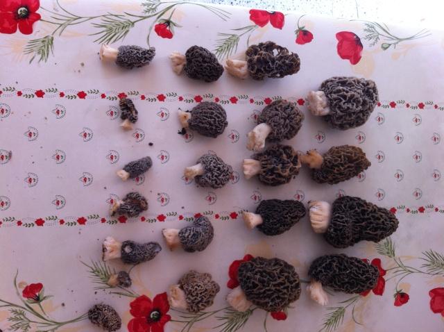 Les champignons , ( girolles , cèpes , morilles ) etc ...  Re_tou10