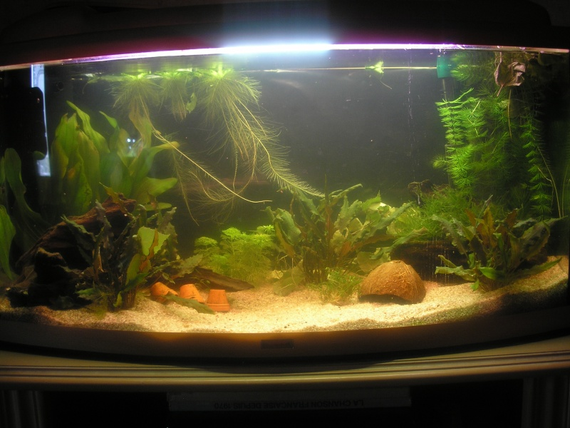 Aide pour biotope Amazonien  - Page 5 Photos10