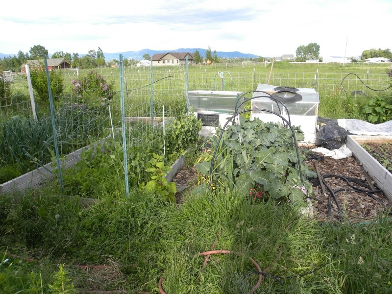 Western Mountains and High Plains: MAY 2013, What's Up in your garden? 13-jun15