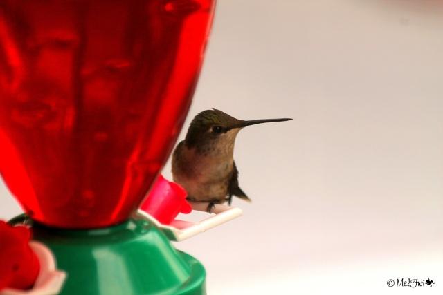 Colibri 216b10