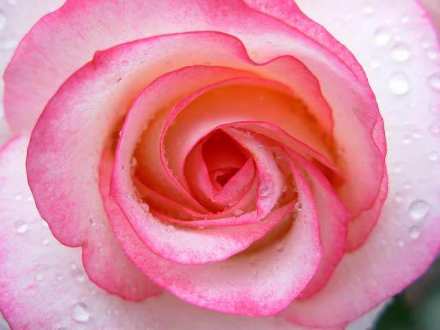 32 - La couleur rose !!! - Page 7 Dscn0236