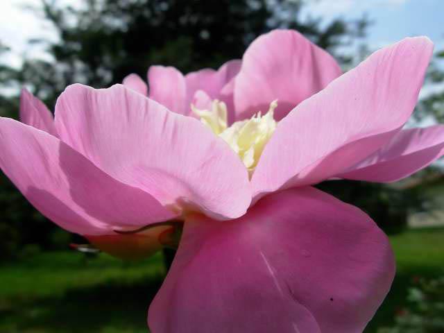 32 - La couleur rose !!! - Page 7 Dscn1110