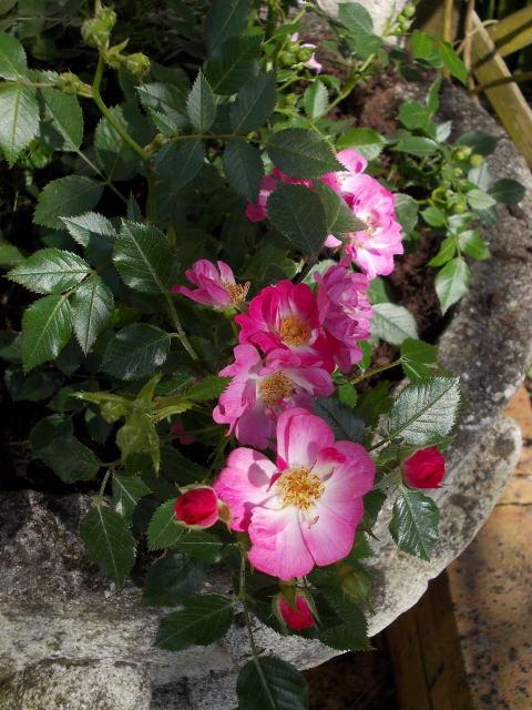 baby bloomer Dscn7532