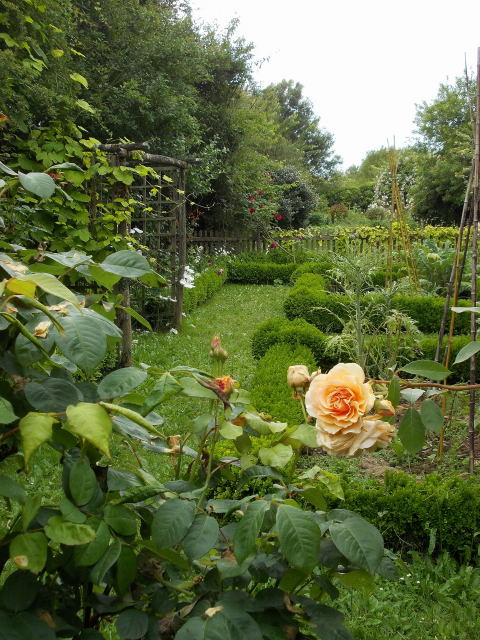 le jardin des rosiers (86) Dscn8449