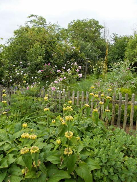 le jardin des rosiers (86) Dscn8451