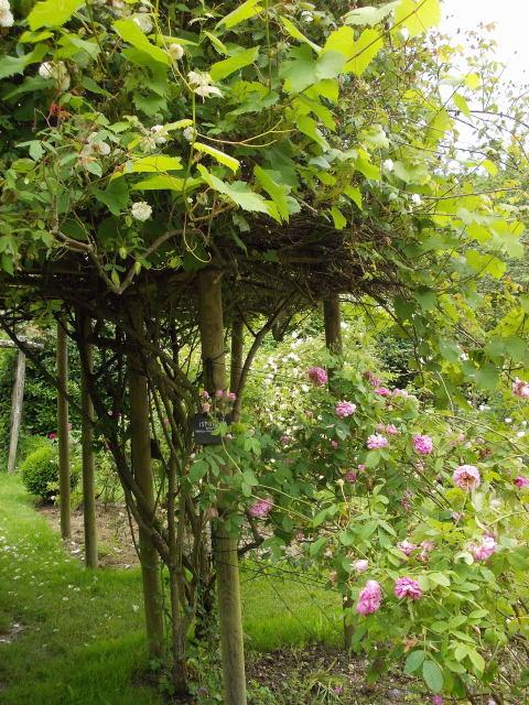 le jardin des rosiers (86) Dscn8459