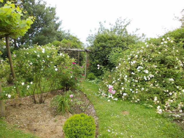 le jardin des rosiers (86) Dscn8460