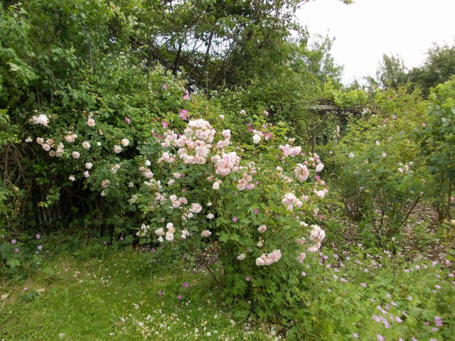 le jardin des rosiers (86) Dscn8461