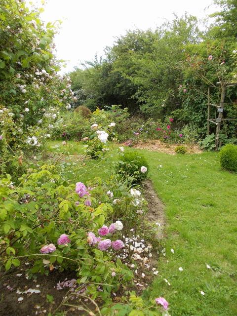 le jardin des rosiers (86) Dscn8464