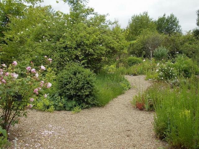 le jardin des rosiers (86) Dscn8466