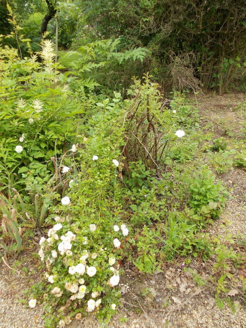le jardin des rosiers (86) Dscn8472