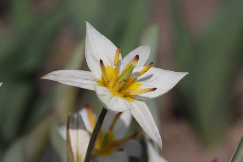 Erste Frühlingsboten im Garten und in Wald und Flur - Seite 96 Img_9815