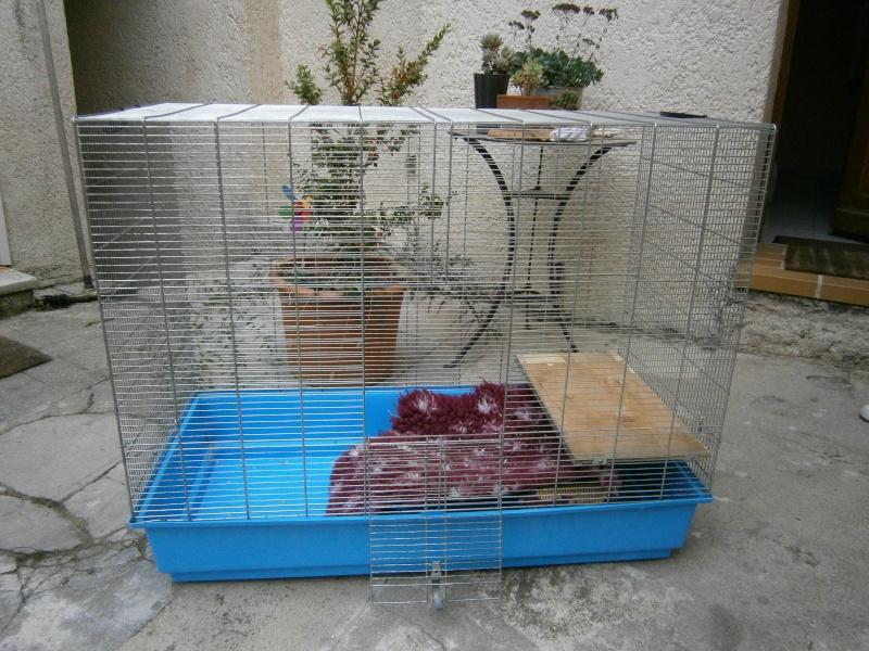 Vend cage type freddy 3 P4250014
