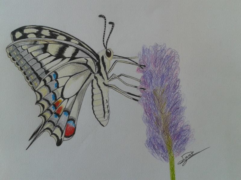 papillon Machaon 2013-023