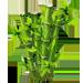 Vous cherchez un arbre ? Venez cliquer ici !!! Bamboo12