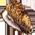 Habitat pour chat => Huître Oyster10