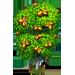 Vous cherchez un arbre ? Venez cliquer ici !!! Pecant11