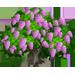 Vous cherchez un arbre ? Venez cliquer ici !!! Pinkli10