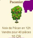 Pacanier => Noix de Pécan Sans_680