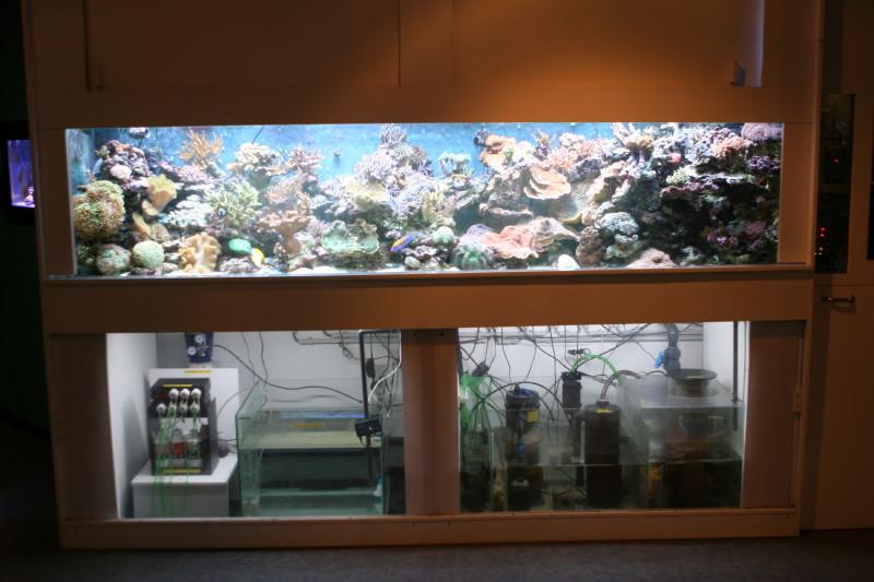 Aquarium de liège Img_0016