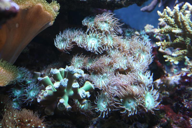 Aquarium de liège Img_0018