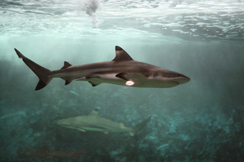 Aquarium de liège Img_0019