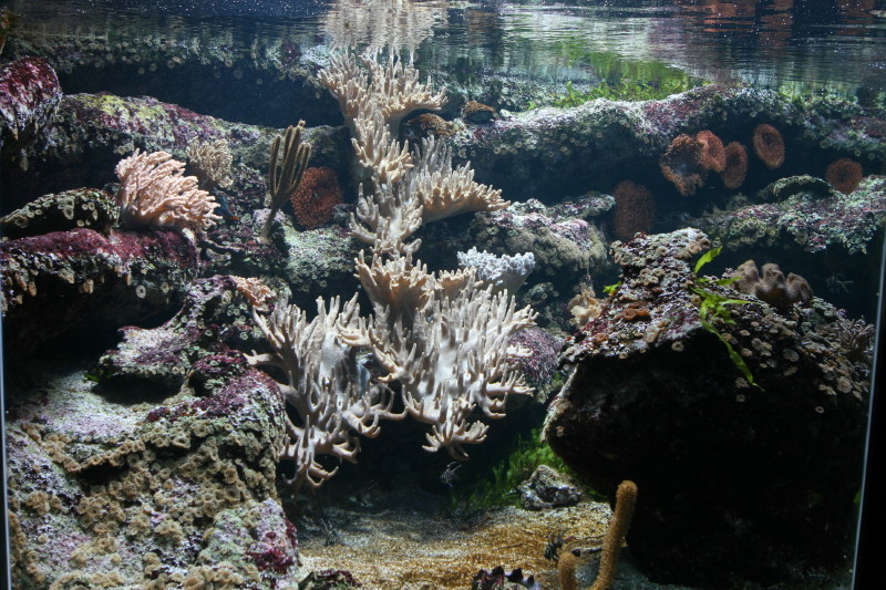 Aquarium de liège Img_0020