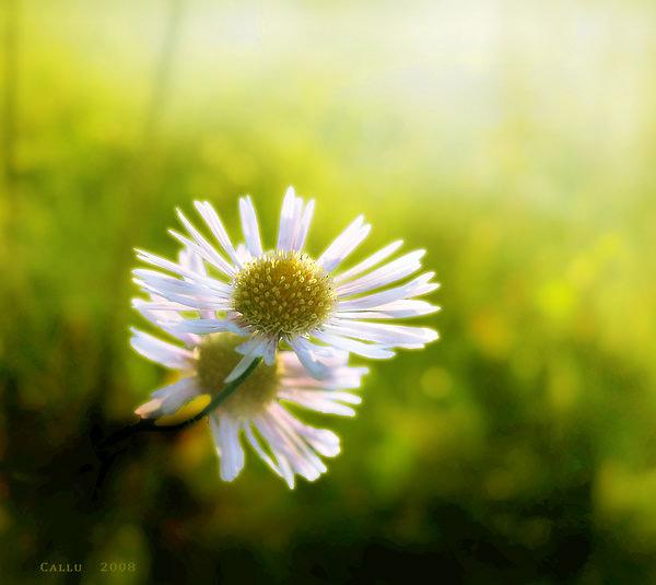 صور للتصميم - صور ورد وفراشات Photo177