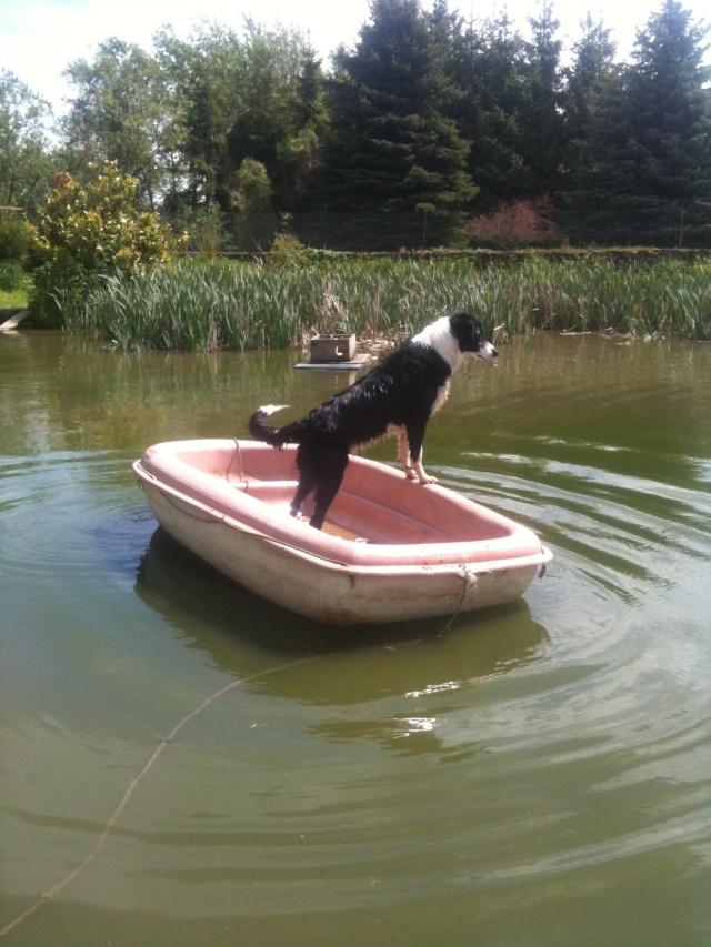 chien - Chien et bateau Photo_13