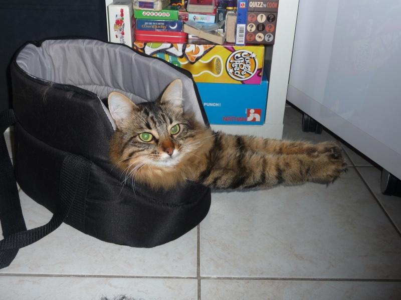 HALF, chaton tigré aux poils longs, né vers le 15 Avril 2012 P1050210
