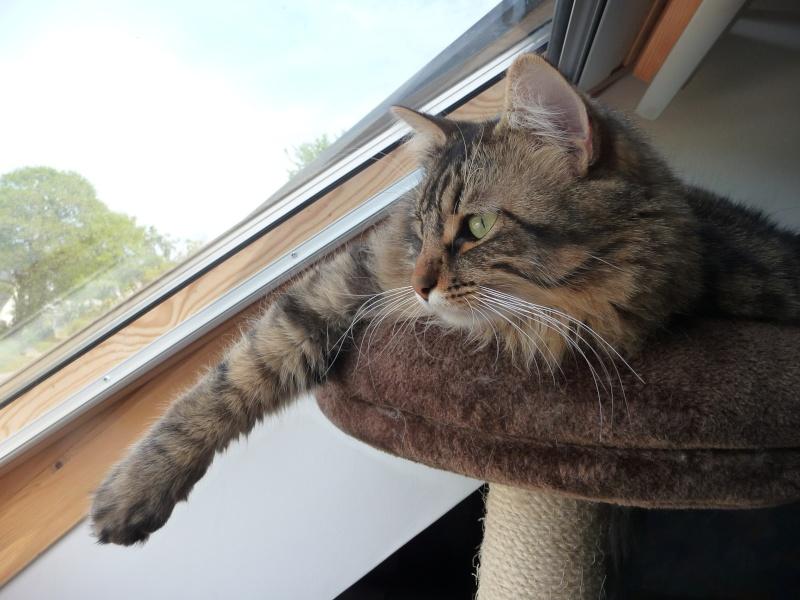 HALF, chaton tigré aux poils longs, né vers le 15 Avril 2012 P1050511