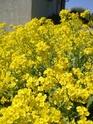 Thème du mois de Mai 2013 : Le printemps est enfin là ! Explosion de la nature Imgp2412