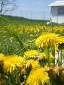 Thème du mois de Mai 2013 : Le printemps est enfin là ! Explosion de la nature Imgp2413
