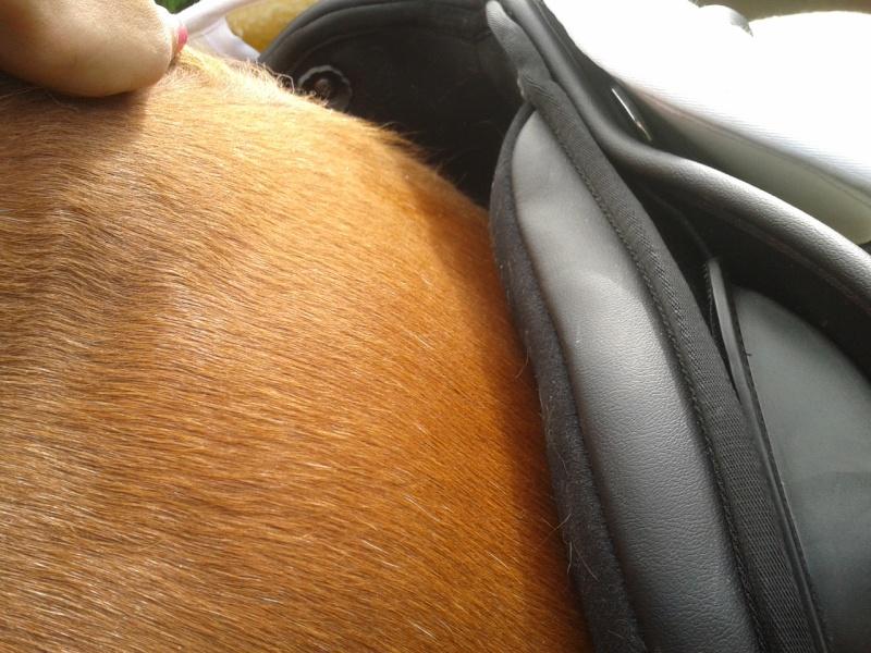 ma selle norton rexine, besoin de conseil 2013-025