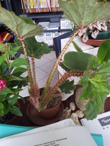 les plantes dans mon bureau Bego10