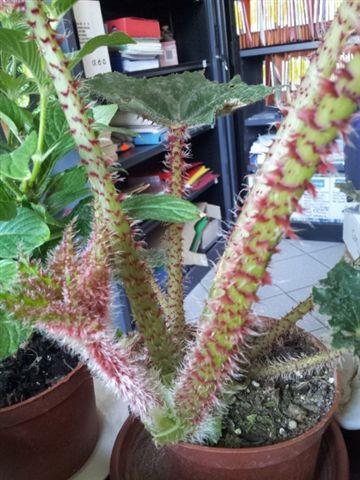 les plantes dans mon bureau Bego_210