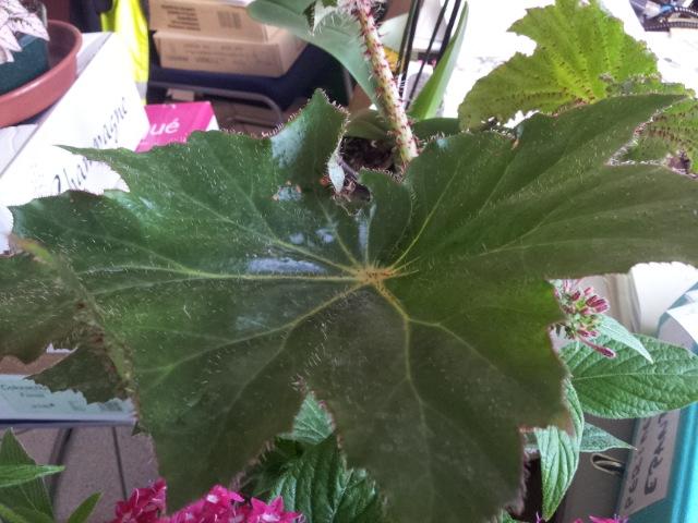 les plantes dans mon bureau Feuill10