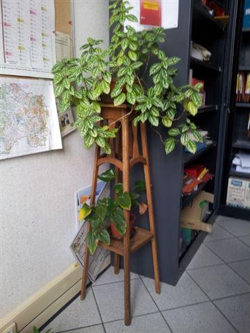 les plantes dans mon bureau Fleur_10