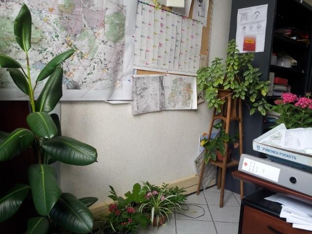 les plantes dans mon bureau Fleur_11