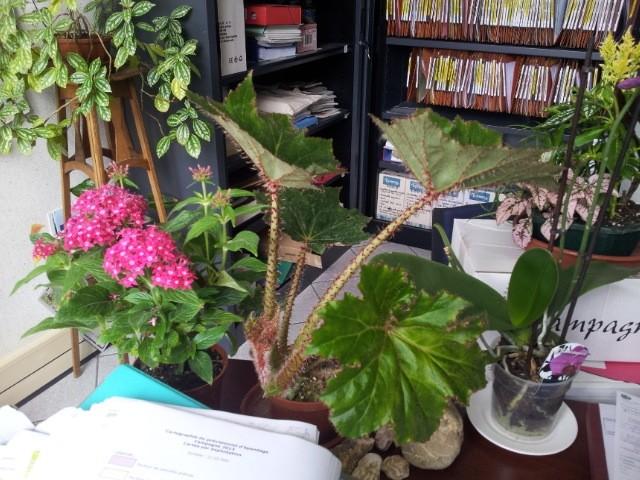les plantes dans mon bureau Fleur_12