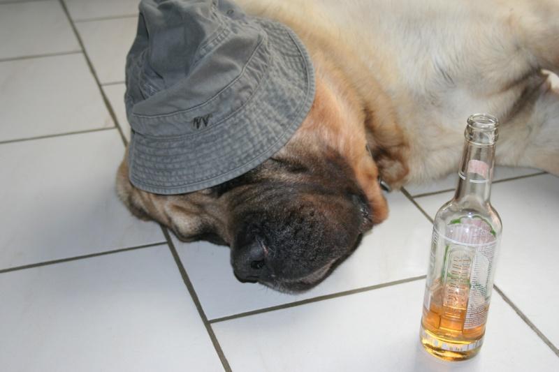 mon chien est alcoolique !!!  - Page 3 Img_6436