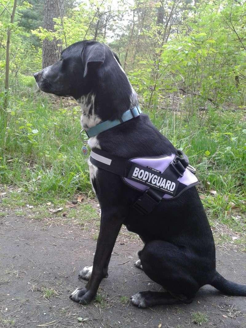Vos chiens et leurs harnais! Photo  2013-038