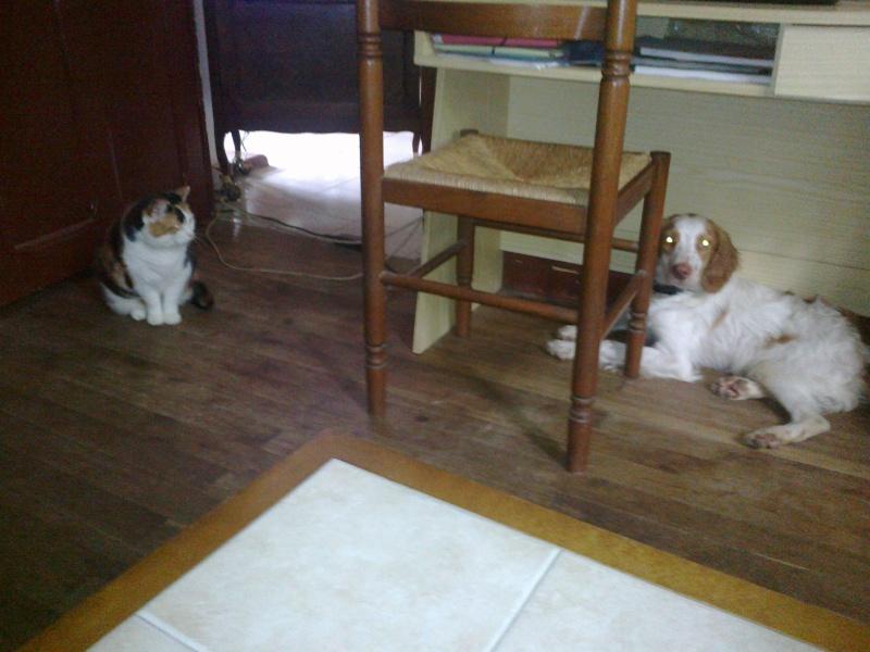 Kookie dans sa famille . 10062014