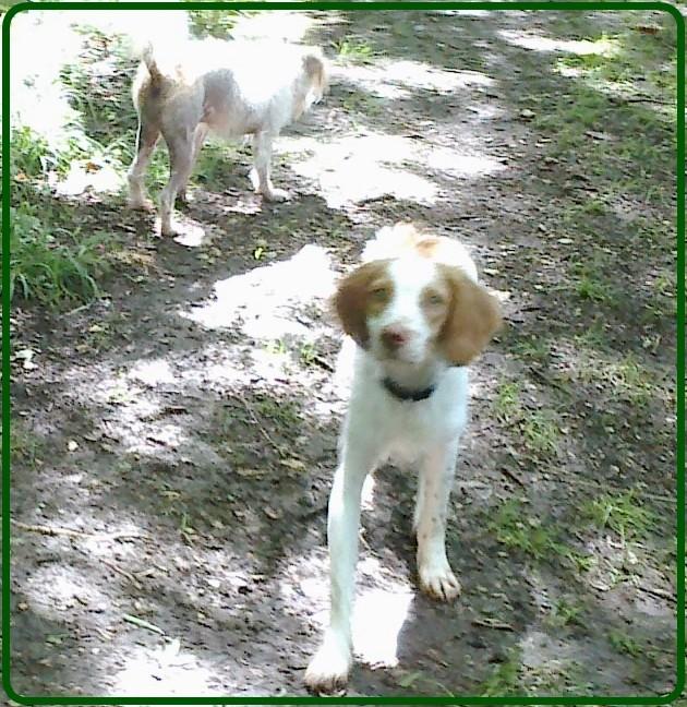 Kookie dans sa famille . 14062010