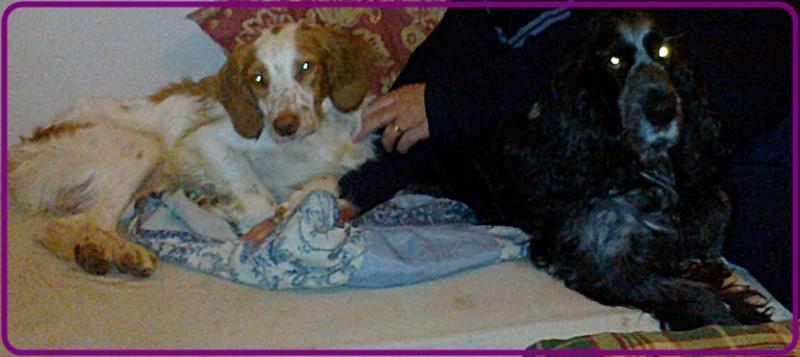 Kookie dans sa famille . 18062011