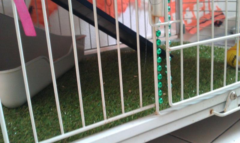 Cage en mode été Imag0914