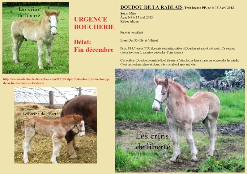 Dpt 35 - Doudou de la rablais - Trait Breton PP - Sauvé par Gaëlle ! (Août 2014) - Page 2 Doudou10