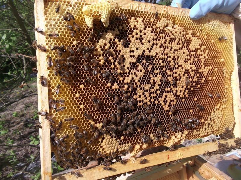 EA avec plusieurs ruches 110