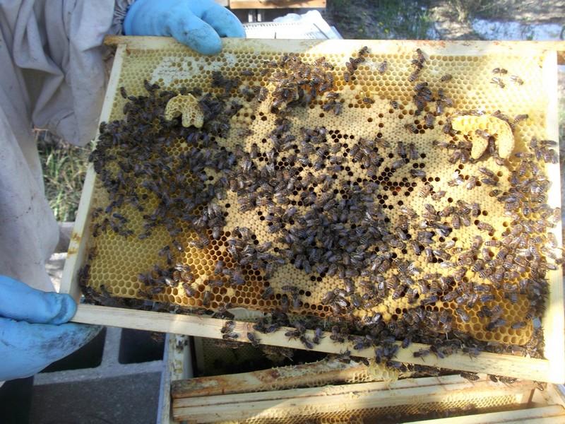 EA avec plusieurs ruches 210