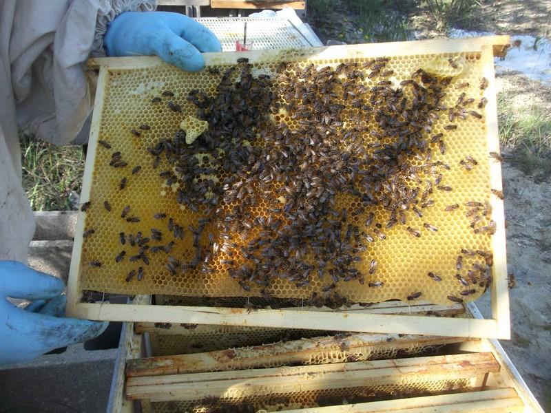 EA avec plusieurs ruches 310